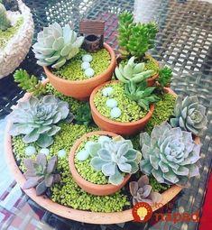 43 Awesome Mini Succulent Ideas in Pots - Deko mit Suculentas - Different Types Of Succulents, Types Of Succulents Plants, Cacti And Succulents, Planting Succulents, Potted Plants, Succulent Landscaping, Succulent Gardening, Succulent Terrarium, Succulent Ideas