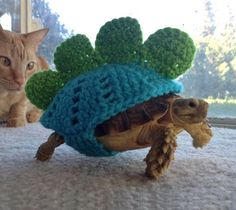 The cat is suffering from a bout of severe jealousy�  I so need to do this for my cuz's turtle. Where can I find the pattern?