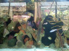 Cute fishies at the zoo!