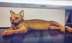 """Ei, é Útil! (Ana e Isa) (@eieutil) no Instagram: """"E esse gato gigante? Fica no MAC USP - São Paulo. A obra toda em pelúcia, medindo mais de três…"""""""