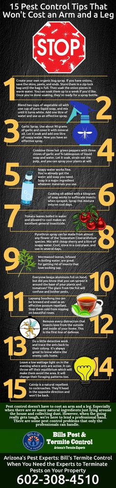 15 Pest Control Tips that won't Cost an Arm and a Leg #Infographics