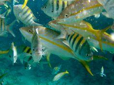 the fish on the Bahamas