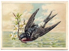 This is a fantastic collection of 29 Best Swallow Vintage Images! So many gorgeous Swallow Bird pictures here to use in your Art and Design projects. Clip Art Vintage, Images Vintage, Vintage Pictures, Vintage Cards, Swallow Bird Tattoos, Motifs Animal, Graphics Fairy, Bird Drawings, Bird Pictures