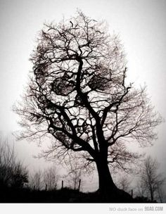 Just a tree. That will kill you in your sleep.