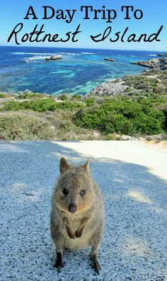 Australia Hotels - Amazing Deals on Hotels in Australia Australia Travel Guide, Australia Tourism, Australia Beach, Perth Western Australia, Australia Hotels, Visit Australia, Australia Holidays, Travel Humor, Funny Travel