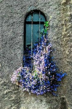 Window box on old stone building - The Simple Gardener Window Box Flowers, Window Boxes, Flower Boxes, Old Windows, Windows And Doors, Casement Windows, Arched Windows, Garden Windows, Window View
