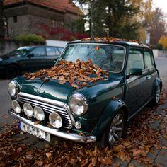 Mini. British Racing Green.     Needs to be driven more.