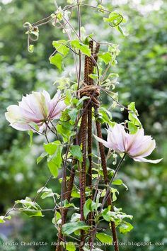 Clematis climbing twig tepee~Image by Charlotte Anderson Garden Art, Garden Vines, Outdoor Gardens, Clematis, Beautiful Gardens, Bloom, Vines, Cottage Garden, Plants