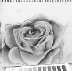Charcoal Rose Sketch