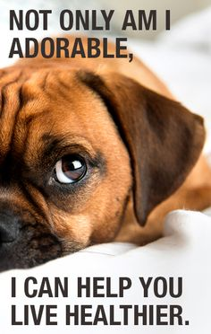 Can your pet really make you healthier? Click here to find out! - This picture looks just like GUS!