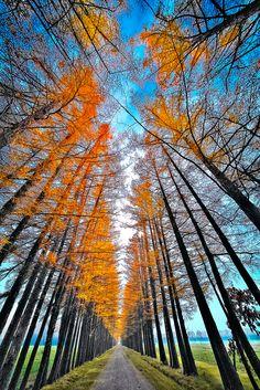 Late Autumn Avenue by Teruyuki Kameda on 500px