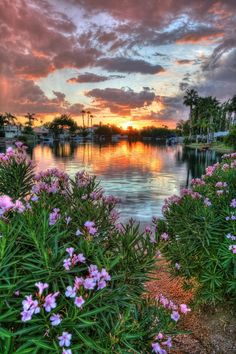 HDR: Oleander Sunset in Arizona