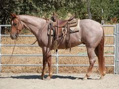 Why do you think is it essential to consider the proper suggestions in acquiring the equestrian boots to be utilized with or without any horseback riding competitors? Cute Horses, Pretty Horses, Horse Love, Beautiful Horses, Animals Beautiful, Western Riding, Horse Riding, Riding Gear, Horse Saddles