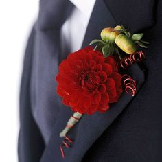 Boast a Rich Boutonniere: Use red dahlia as the focal point of a boutonniere, paired with dahlia buds. Dahlias are late summer and early autumn flowers and come in the fall hues of orange, red, gold, and deep pink. Create an arrangement that include dahlia, dahlia buds, and curled red wire.