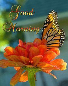 Good Morning Cards, Amazing Gifs, Beautiful Morning, Day, Mornings, Image, Peeps, Friendship, Night
