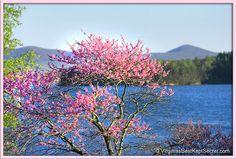 Smith Mountain Lake, Virginia.