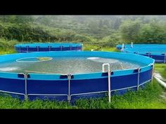 You can Buy good quality Collapsible fish tank portable koi tanks rom us. We are collapsible fish ponds supplier for more than 12 years. Shrimp Farming, Fish Farming, Hydroponic Fish Tank, Hydroponics, Koi Fish Care, Fish Ponds, Aquarium, Exterior, China