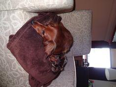 Awwww..... looks like my little Gustav!