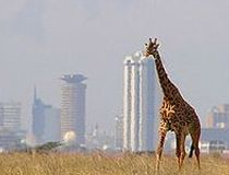 Nairobi, Kenya - the country's capital city can attract visitors of the wild side. I loved traveling to Nairobi, Kenya and Addis Abba, Ethiopia. It was a wonderful eye opener. I long to visit other African Countries. Africa Our Africa! Nairobi City, Kenya Nairobi, Kenya Africa, East Africa, Mombasa, Cool Places To Visit, Places To Travel, Places To Go, Kenya Travel