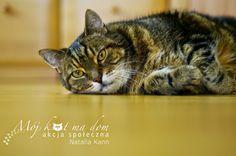 Mój kot ma dom - Akcja społeczna: IV.050