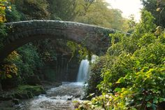 Peruse Jesmond Dene, Newcastle. | 18 Things To Do In The North East Before You Die