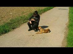 unbedingt anschauen Mein Hund, der Allesfresser ! (Hundeerziehung, Hunde...