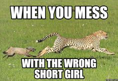 Are you looking for short girl memes? Here are 20 memes that best describes how it's like being short. Short People Humor, Short People Problems, Funny People, Fat People Memes, Funny Things, Random Things, Random Stuff, Funny Stuff, Short Girl Quotes