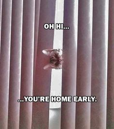 Dump A Day Friday's Funny Pictures - 85 Pics!