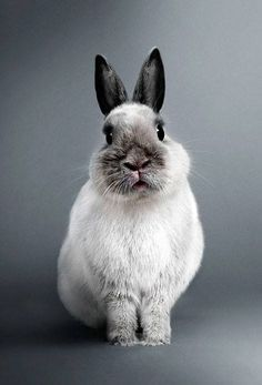 This is an aesthetically appropriate portrait of the lapin.