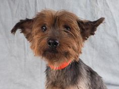 #Adopt Rita, a lovely 10 years  5 months Dog available for adoption at…