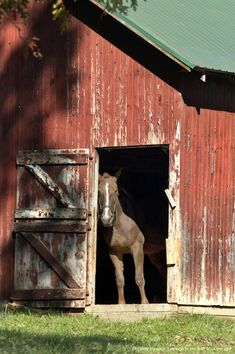 - Ohio, Holms County, Amish life, Horse in barn                                                                                                                                                      More