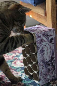 Boite avec des rouleaux de papier toilette et des friandises pour chat