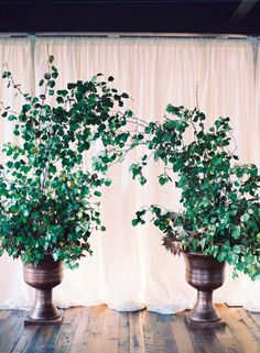 Potted greenery forming a natural archway for an indoor ceremony Aisle Flowers, Wedding Ceremony Flowers, Wedding Ceremony Decorations, Ceremony Backdrop, Floral Wedding, Fall Wedding, Wedding Decor, Large Floral Arrangements, Floral Arch