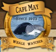 Whale Watching in Cape May, NJ-  2 hours outside NYC