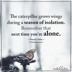 Life Quotes Discover The Caterpillar Grows Wings During A Season Of Isolation. The caterpillar grows wings during a season of isolation. Remember that next time youre alone. Now Quotes, Life Quotes Love, Wise Quotes, Quotable Quotes, Great Quotes, Words Quotes, Quotes To Live By, Motivational Quotes, Truth Quotes