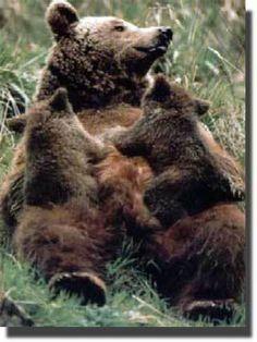 Especies en peligro de extinción. Los Pirineos.