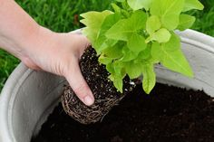 Tips for planting in very large garden pots