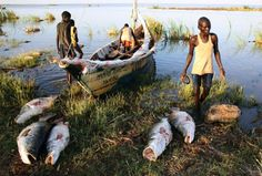 Unlooding freshly caught Nile Perches at a fishing cam on the western shore of Lake Turkana, close to Todonyang, near the Kenya-Ethiopian border. Photographer: Goran Tomasevic