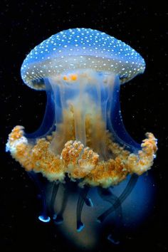 Jellyfish have roamed the seas for at least 500 million years, and possibly 700 million years or more, making them the oldest multi-organ animal !!