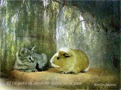 Paz  Kitty.