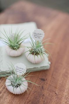 Some of the simplest spring DIY wedding favor projects are celebrations of the season. Everything is green and bright and new, and these favors are projects that incorporate those elements in easy and unique ways. Think small potted or boxed plants, like like these air plants.