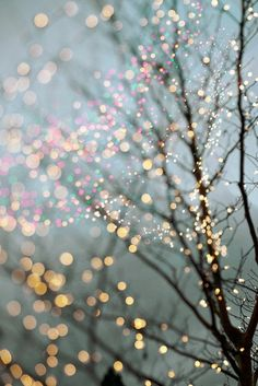 Holiday Fairy Lights in Trees, Festive Winter Scene