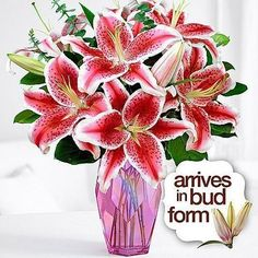 Fragrant lilies are ideal for any occasion. Calla lilies, Peruvian, Stargazers – we have all the top picks. Flowers For You, Fresh Flowers, Calla Lily, Stargazer Lilies, Lilies Flowers, Personalized Family Gifts, Flower Arrangements Simple, Love Lily, Best Honey