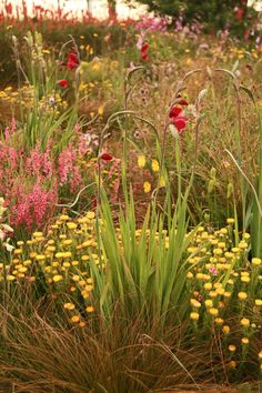 Sarah Price's Design Website - one of the most prominent garden designers in Britain.