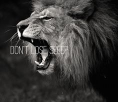 A lion doesn't lose sleep over the opinion of sheep.