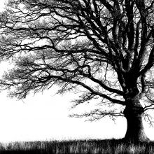 Alone Tree Photo Wallpaper