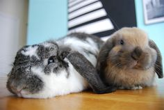 Bunnies Are Knackered