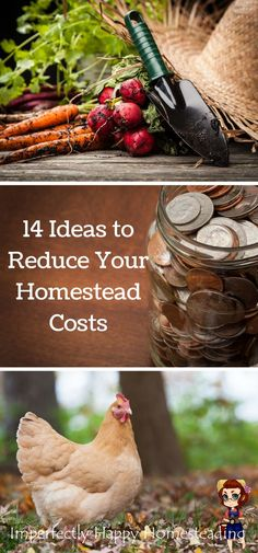 14 Ideas to Help You Reduce Your Homestead Costs and Save Money Homesteading or Backyard Farming.