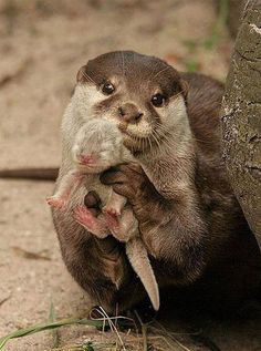 Loutre and baby.  Obviously one proud mama.