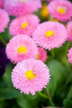 ✯ Pink Buttons Flowers